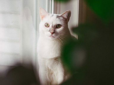 Pets in properties: Purr-fect or barking mad?